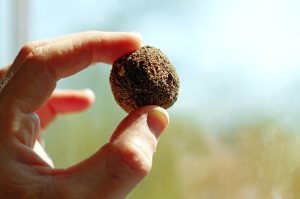 A seed ball!