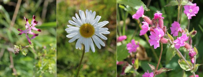 flowers at inglenook